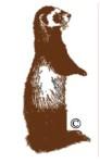 West Australian Ferret & Ferreting Society Inc.