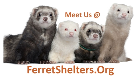 Meet Us @ FerretShelters.Org Vinyl Sticker