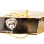 Ferret In Shopping Bag Promoting SAFR Shop A Ferret Rescue