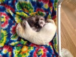 Massachusetts Ferret Friends