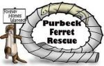 Purbeck Ferret Rescue