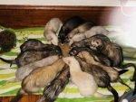 Seacoast Ferret Rescue & Sanctuary